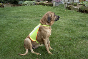 Refleksvest til hund
