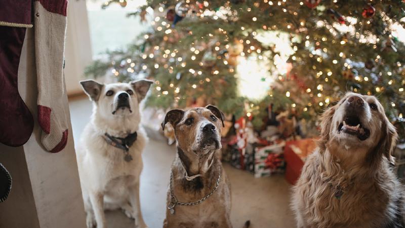 hund jul