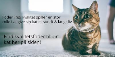 kattemad til katte i alle aldre og størrelser